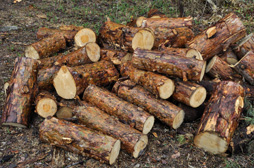 Wood Piles like this are an invitation for termites and other pests.